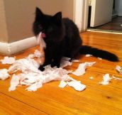 Mischievous Cats Caught Red-Pawed