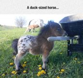 Now We Have To Find A Horse Sized Duck