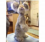 Meet Wally: The Angora Bunny