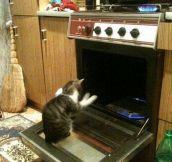 The Oven Temperature Is At 666 Degrees