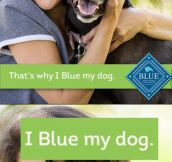 I Blue My Dog