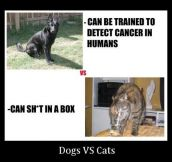 Main Difference Between Dogs And Cats