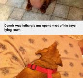 The Dieting Dog