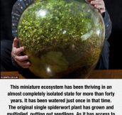 A Bottled Ecosystem