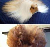 Fabulous Hair Day