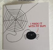 What Spider Webs Are Made Of