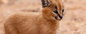 25 Adorable Deadly Animals…