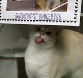 Would You Adopt Him?