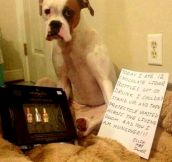 The Best of Dog Shaming – Part 29 (15 Pics)