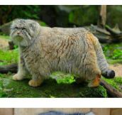 Meet The Pallas Cat