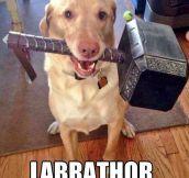 Thor's Pet