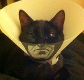 Nanananana… Catman!