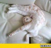 OK Sure, Whatever's Comfortable