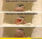 Lizard Humor