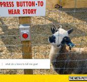 The Goat Storyteller