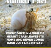 Fun Animal Fact