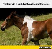 Meta Horse