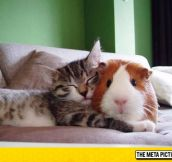 A Kitty And A Guinea