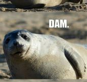What Did The Seal Say?