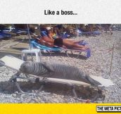 The Global Seal Population Is In Recline