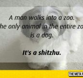 Man Walks Into A Zoo