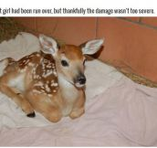 This Family Saved An Injured Deer And Raised Her As Their Own (8 pics)