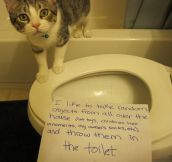 The Best of Cat Shaming – Part 15 (19 pics)