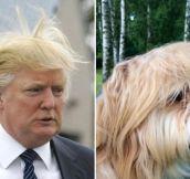 Donald Trump Lookalikes… (18 Pics)