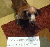 The Best of Dog Shaming – Part 30 (18 Pics)