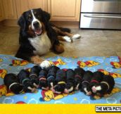 Mommy And Her Pups