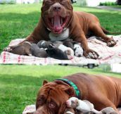 A Proud Father