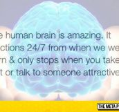 The Human Brain Is Amazing
