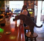 Just The Usual Customer Having A Drink