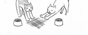 The Intelligence Of Cats