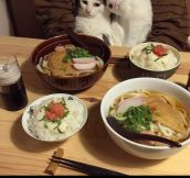 Fancy Dinner With Cats