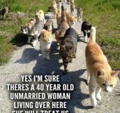 Cats On A Mission