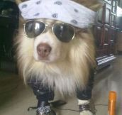 If Axl Rose Was A Dog
