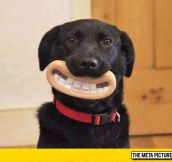 Wallace And Gromit Style