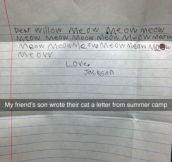 Dear Cat