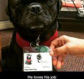 Edgar The Pug
