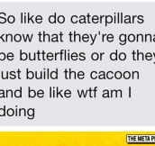 I've Always Wondered This About Caterpillars