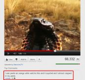 Old Youtube Comments Were The Best