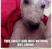 A Story of a Stray Dog… Faith in Humanity Restored