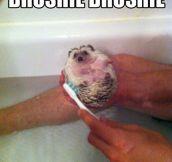 Brushie Addict