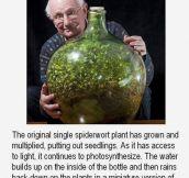 A Tiny World Inside A Bottle