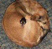 It's The Perfect Sleeping Spot