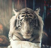 Simply Majestic