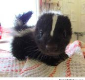 Suddenly, A Tiny Baby Skunk