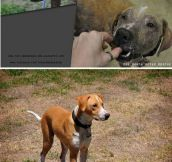 Rescued Dog Recovery