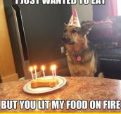 Birthday Dog Is Disappointed